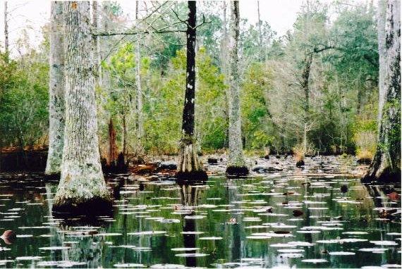 Cypress Gardens South Carolina Wanderlust Pinterest