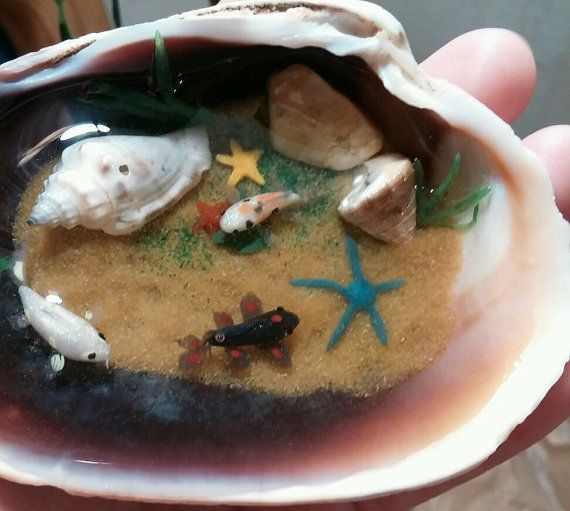 Miniature koi fish and starfish pond in a clamshell for Clay fish pond