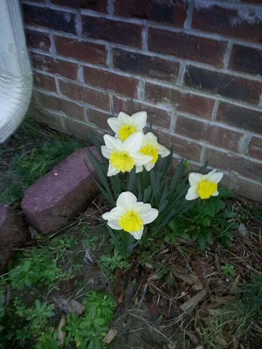 flowers blooming in houston