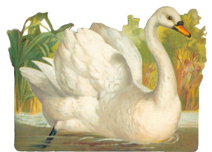 Vintage swan clipart by ~jinifur on deviantART