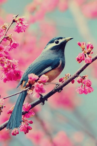 The dreamy blue of the bird accentuated by the vibrant pink of the flowers. Gorgeous.