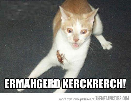 ermahgerd kerckrerch! funny cat | LOL | Pinterest