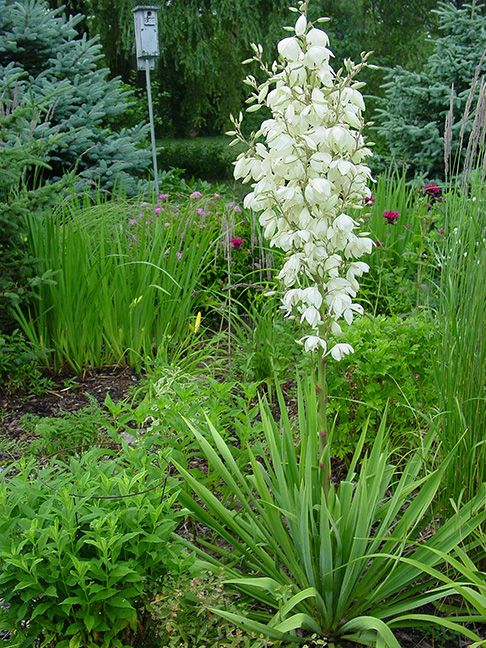 Pin by cindy louise on here we grow pinterest for Easy garden plants to take care of