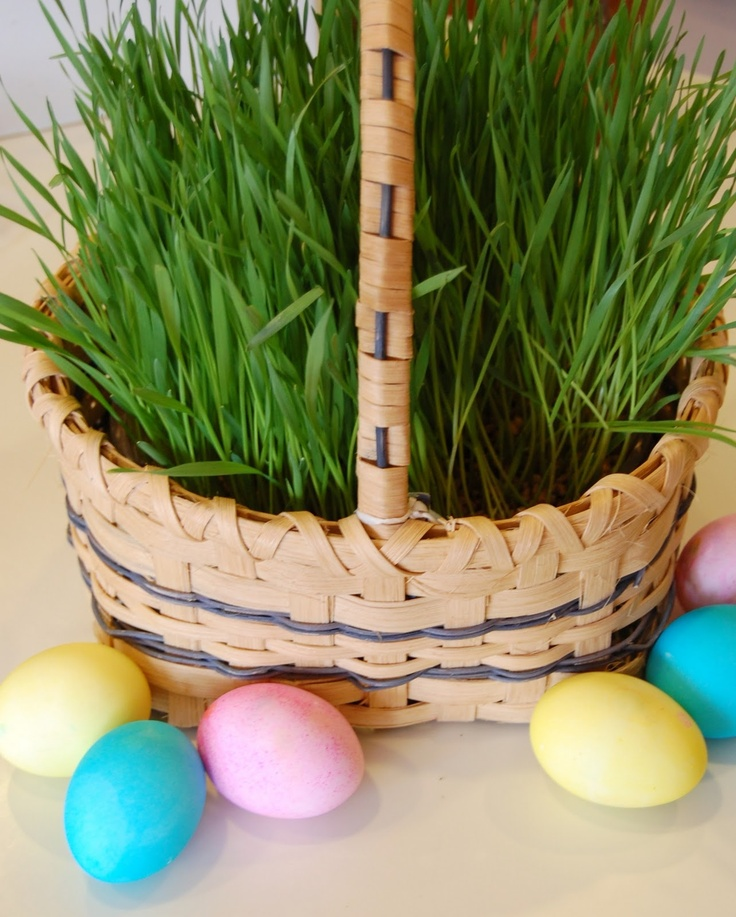 How to Create a Living Easter Basket blog image 1