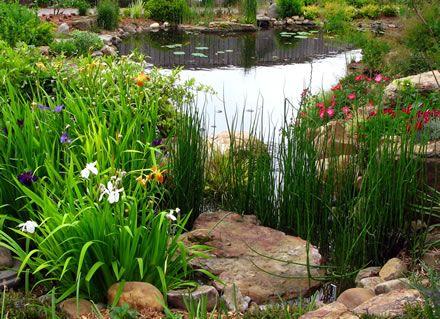 Pin by debbie kays on water gardens pinterest for Plants around garden pond