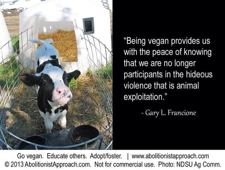 vegan quotes vegan pinterest