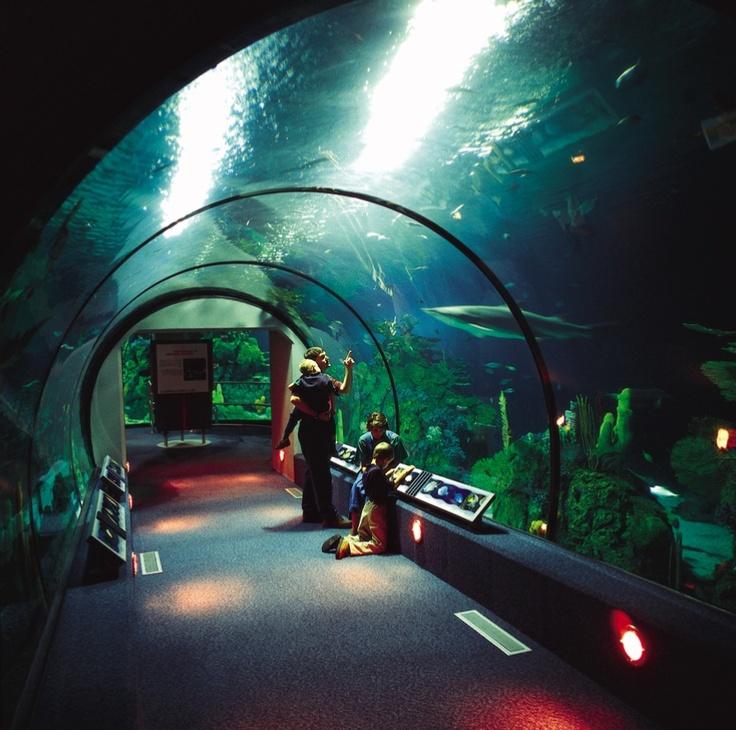 Houston Aquarium Favorite Places Spaces Pinterest
