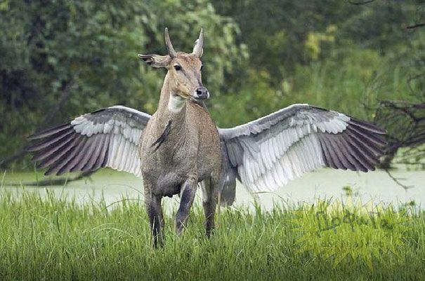 is this pegasus?