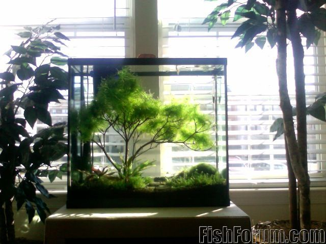 So green Marino and aquascape obsession Pinterest