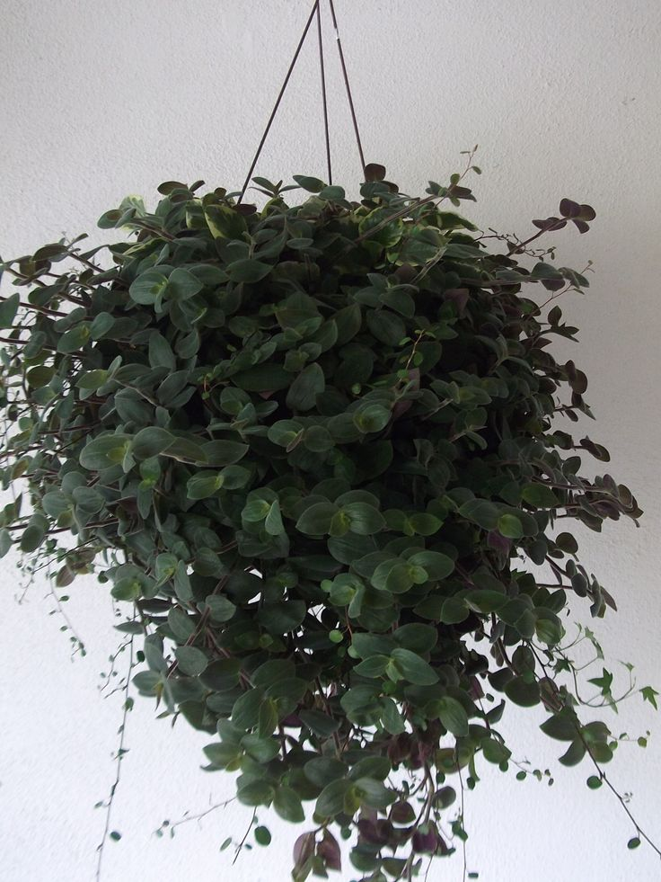 Shade Loving Hanging Plant How My Garden Grows Pinterest