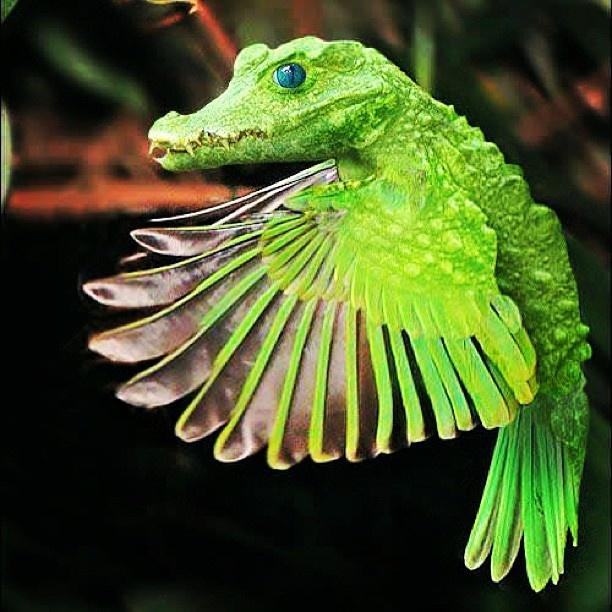 crocodile bird cute cool weird amp funny stuff pinterest
