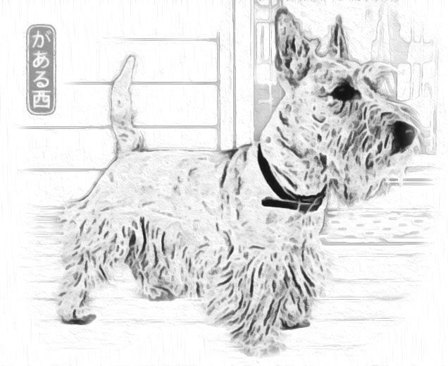 scottish terrier coloring pages - photo#31