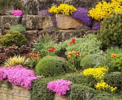 Best plants for rock gardens gardening pinterest for Best garden plants