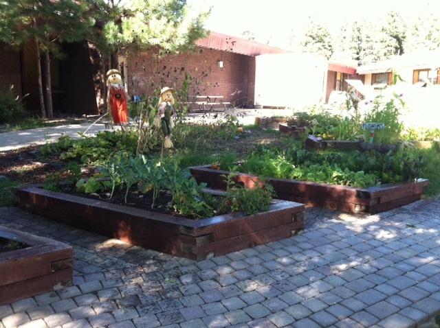 Raised beds | School Garden Ideas | Pinterest