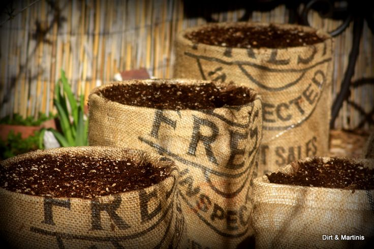 love these burlap wrapped planters growing carrots from @Nicky @dirtandmartinis