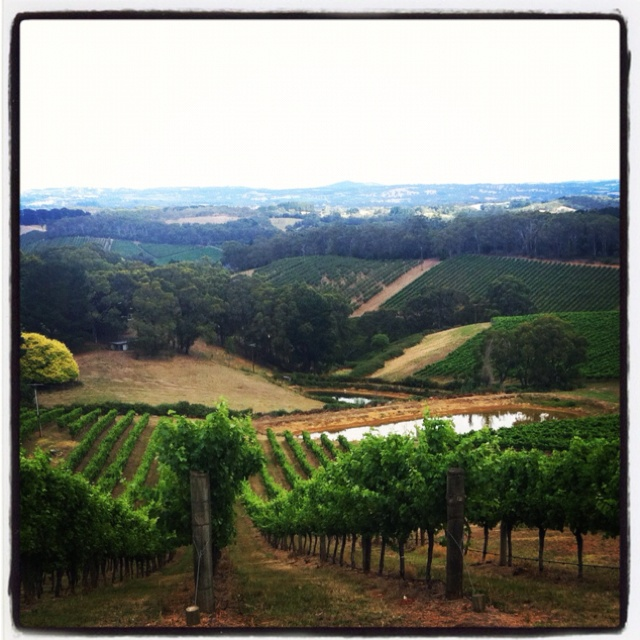 pin adelaide hills australia -#main