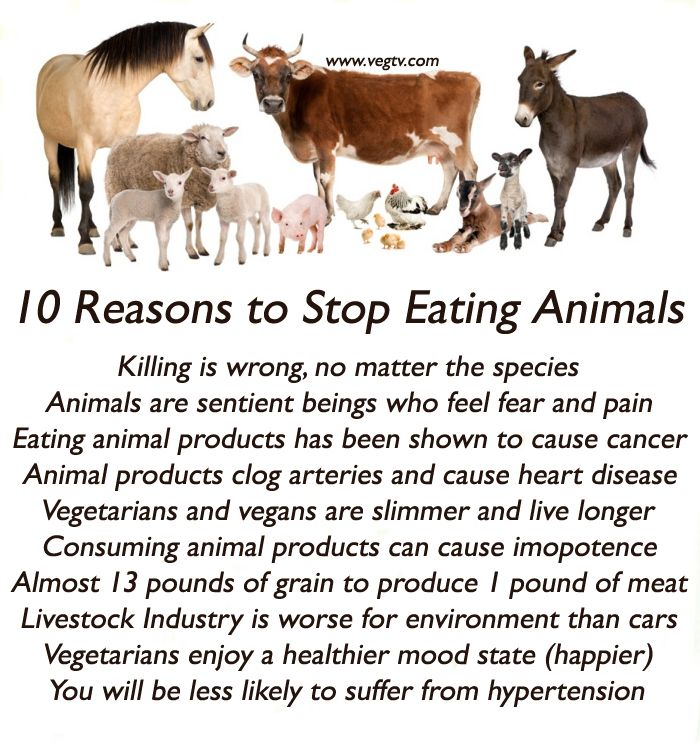 10 reasons to stop eating animals animals are fur people or sea peo