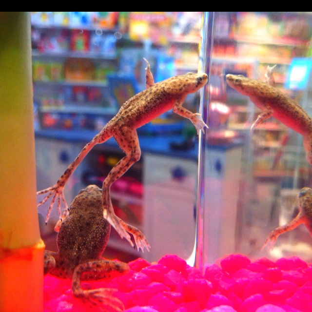 Aquatic Frog Pets! Ive had mine for about 2 years