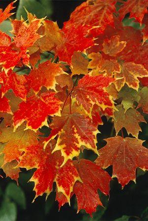 nice autumn foliage