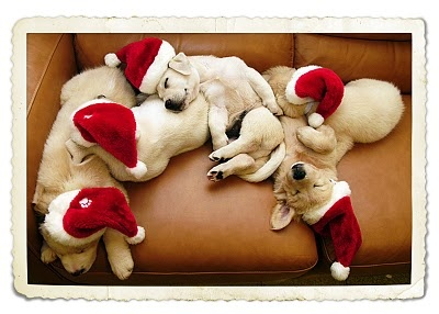 Twas the night before Christmas, and no one was up.  Not mommies, not daddies, nor children or pups.