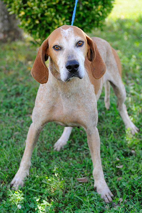 Lewis City Rescue Dog Washington