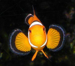 Where s nemo fish underwater oceans of the world