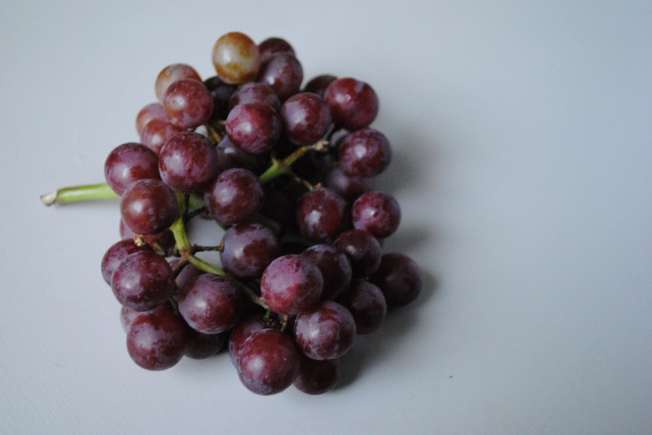 grape toxicity pets delicious deadly