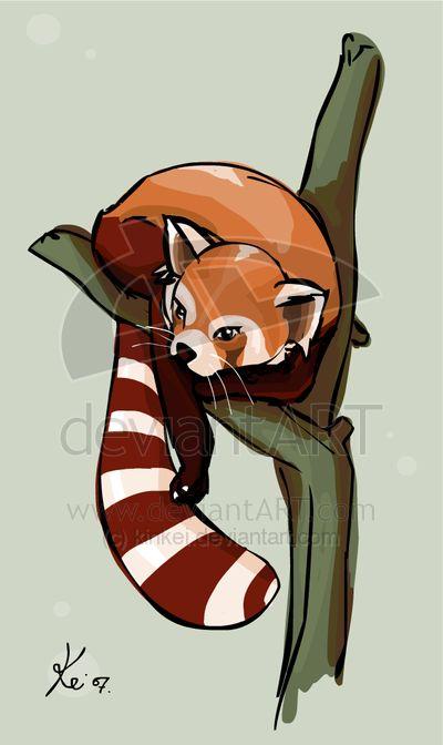 red pandasRed Panda Drawing Furry