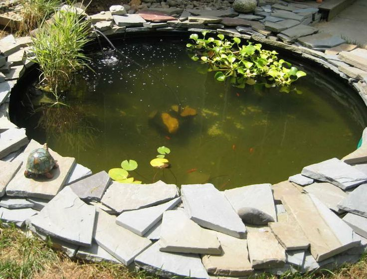Small fish pond with turtle sculpture watergardening for Small fish ponds