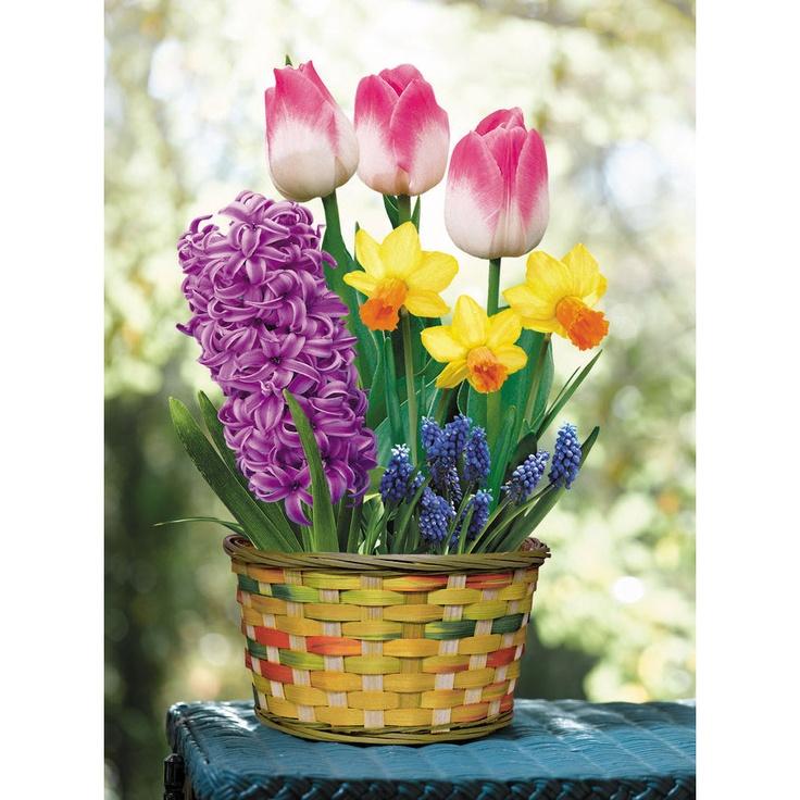 Flower Bulb Baskets : Spring bulbs basket