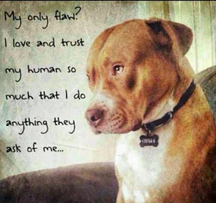 The gallery for --> Pitbull Sayings