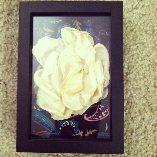 dried rose petals a shadow box craft ideas pinterest