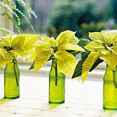 Poinsettisas en botella