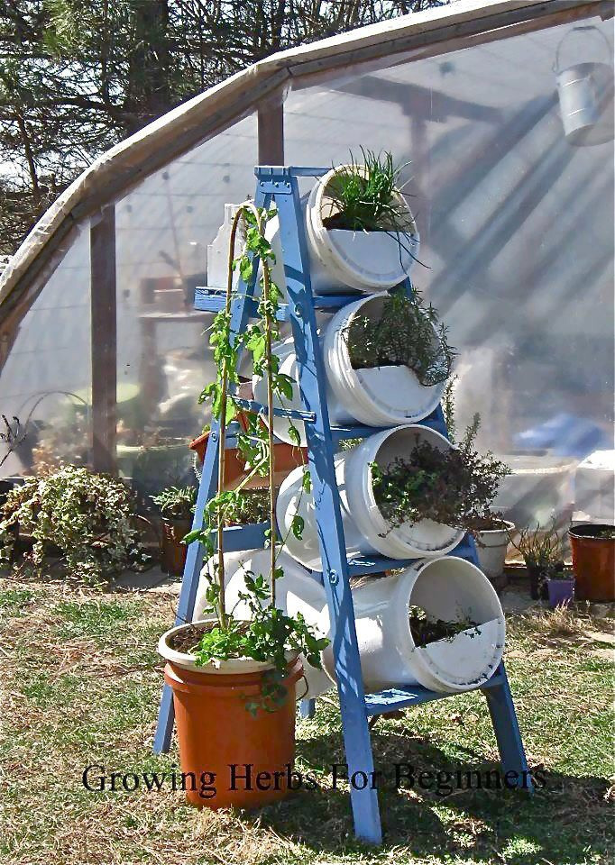Growing Herbs for Beginners gardening Pinterest