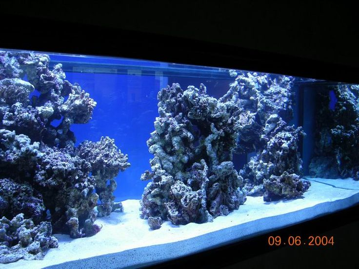 Reef Aquarium Design : reef aquascaping designs - Google Search Aquarium Pinterest
