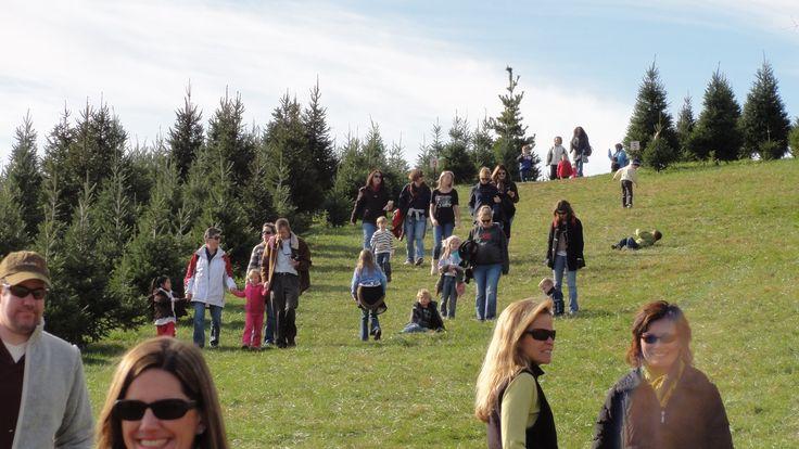 Snickers Gap Christmas Tree Farm