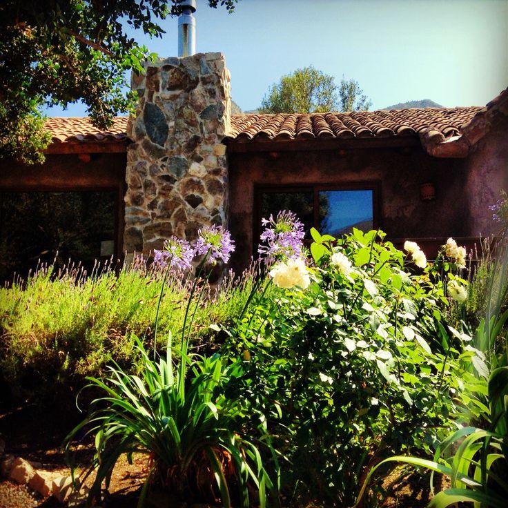 Rosas y agapantos jardines pinterest - Jardines con rosas ...