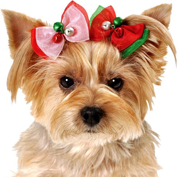 how to make yorkie hair bows