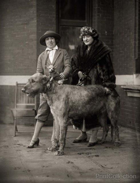 L'Irish Wolfhound 1e388851d9d7eece28d752362762c4a3