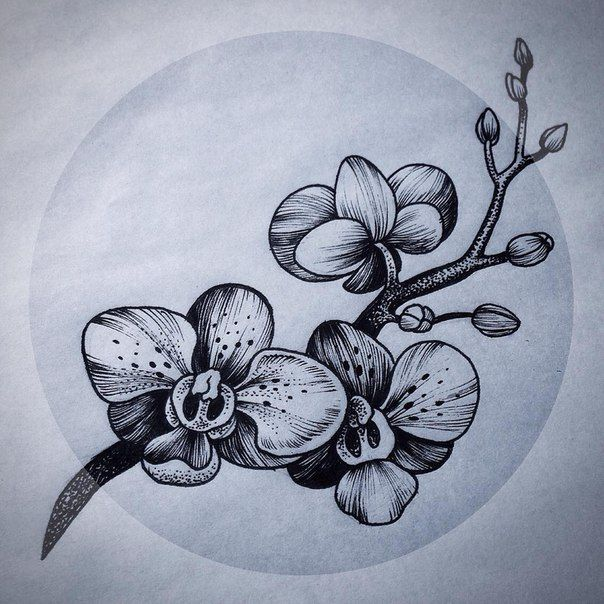 Орхидея для росписи
