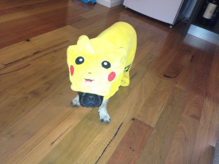 Pikachu | Pug in Clothes | Pinterest Pug