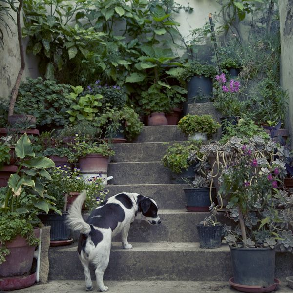 An Italian dog with his own garden. Ulicam: In Italy...