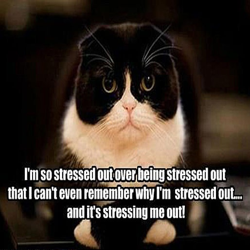 I'm so stressed out over being stressed out that I can't even remember why I'm stressed out... and it's stressing me out!
