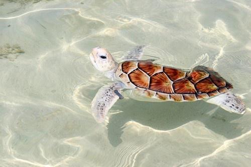 Turtle is so cute! Turtles Pinterest