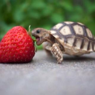 Wee turtle.
