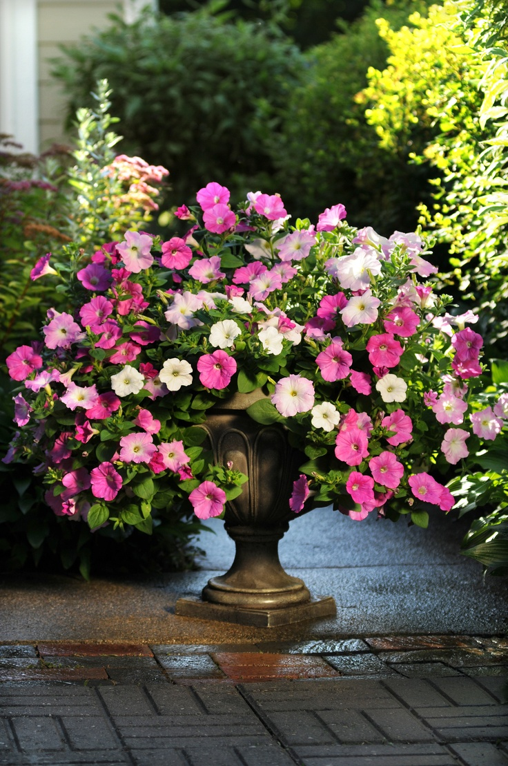 Easy wave pink marble mix in a container wave - Wave petunias in containers ...