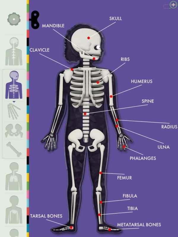 Human Body app for kids: Love that it allows kids free exploration, no instructions, no winning or gamification.