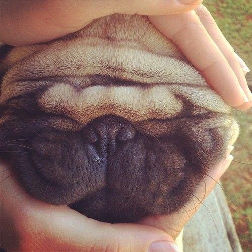 Wrinkle sandwich!!!