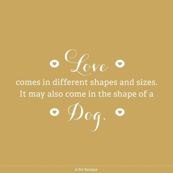 Yeahhhhh dog dogs love pet pets quotes petbaroque doggy