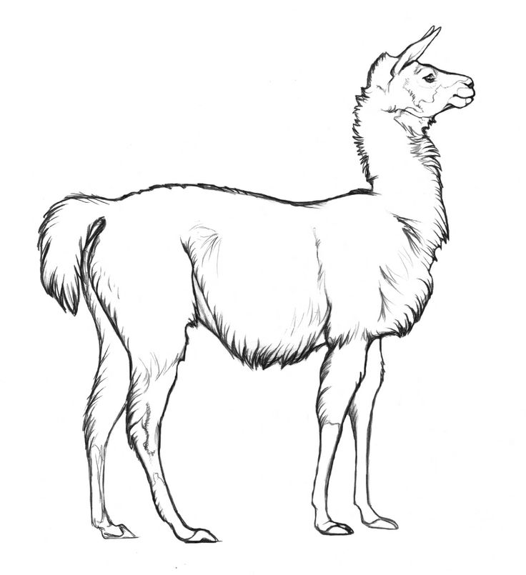 Llama Color Page Argentina Animal Templates Pinterest Llama Coloring Pages